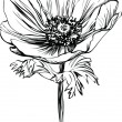 Black and white picture poppy flower on stalk — стоковый вектор #6980949