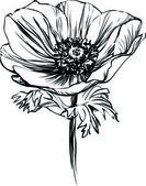 Black and white picture poppy flower on the stalk — 图库矢量图片