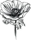 Siyah beyaz resim haşhaş çiçek sapı üzerinde — Stok Vektör