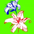 Two lilies on a green background — Stockvectorbeeld