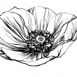 Black and white picture poppy flower - 图库矢量图片