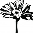 Black and white picture of nature daisy flower on the stalk — Vektorgrafik