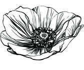 Black and white picture poppy flower — Stok Vektör