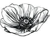 Siyah beyaz resim haşhaş çiçeği — Stok Vektör