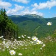 Carpathian mountains in summer, Ukraine — Stock Photo #7164854