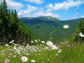 Carpathian mountains in summer, Ukraine — Stock Photo