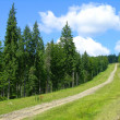 Royalty-Free Stock Photo: Bike tracks in Carpathian mountains