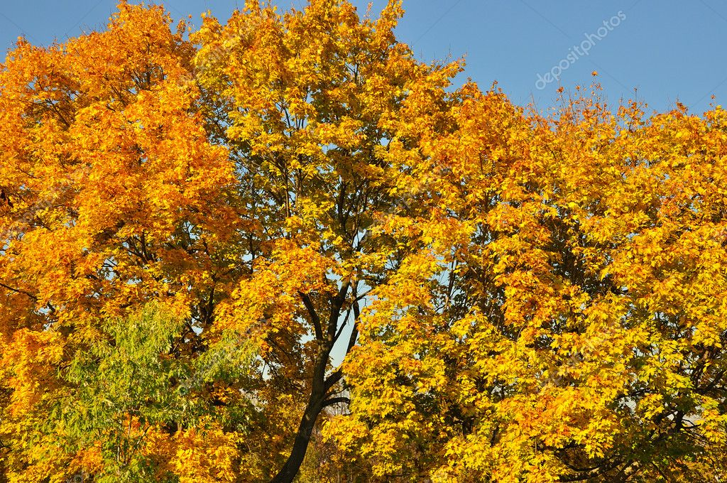 Brilliant fall background of colorful autumn leaves  Stock Photo #7694691