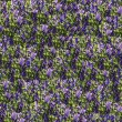 Wild flowers seamless — Stock Photo