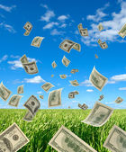 Dollars on background sky and herbs. — Stock Photo