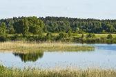 Vacker skogssjö — Stockfoto