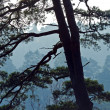 Stock Photo: Single pine-tree by a misty morning