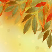 Bright autumn leaves on the abstract background with bokeh — Stock Photo