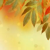 ボケ味を持つ抽象的な背景に明るい秋の葉します。 — ストック写真