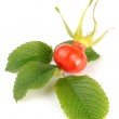 Rose Hip with Leaves — Stock Photo #7183191