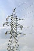 Electricity Pylon and Birds on Power Line — Stock Photo