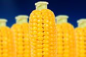 Corn on the Cobs — Stock Photo