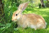 Cute Rabbit in the Garden — Stock Photo