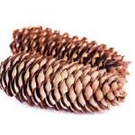 Cone spruce — Stock Photo #7181212