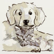 Puppy and kitten — Stock Photo #6804813