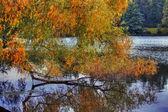 Vrby větev — Stock fotografie