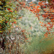 Stock Photo: Autumn bushes