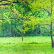 Sunny park with oak — Stock Photo #7271658
