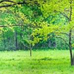 Sunny park with oak — Stock Photo