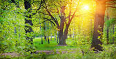 Sunny park with oak — Stock Photo