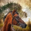 Arabian horse portrait. — Stock Photo