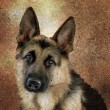 German shepherd portrait - Stockfoto