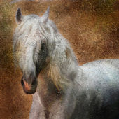 Andalusian horse portrait. — Stock Photo