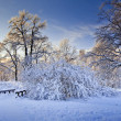 Winter panorama — Stock Photo