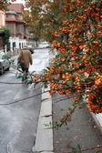 äldre man gå på hösten gatan — Stockfoto