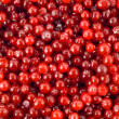 Cranberry berry — Stock Photo