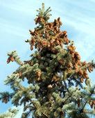 圣诞树 — 图库照片