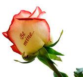 "Rose ""Be Mine..."" — Stock Photo"