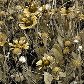 Fondo grunge floral — Foto de Stock