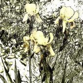Fondo de arte floral grunge — Foto de Stock