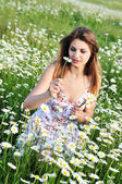 One daisy, two daisy — Стоковое фото