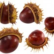 Chestnuts isolated on white for design - Stock Photo