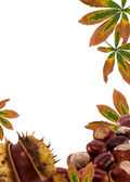 Chestnuts and leaves.Autumn nature frame background — Stock Photo