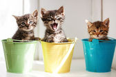 Funny kittens — Stock Photo