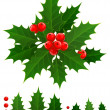 Holly berry — Stock Vector