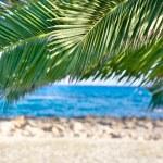 Palm trees and sea — Stock Photo