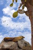 León marino de reclinación — Foto de Stock