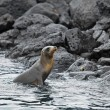 Sea lion colony - Stock Photo