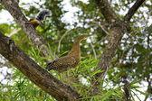 Esquilo e heron juvenil — Foto Stock