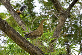 Juvenil heron ve sincap — Stok fotoğraf