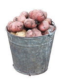 Bucket of potatoes — Stock Photo